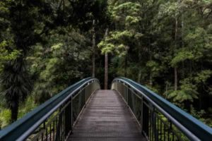 Walking bridge to a forrest