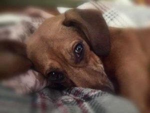 dog laying on a pillow looking sad